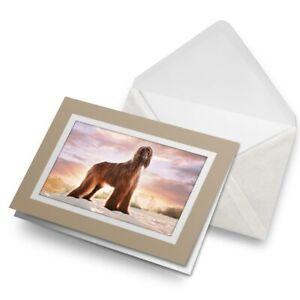 Greetings-Card-Biege-Afghan-Hound-Dog-Puppy-16262