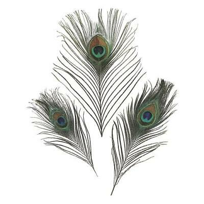 Knorr Prandell 15-20cm Pheasant Feathers 8pcs #6617980