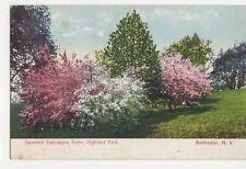 Japanese Crab Apple Trees Highland Park Rochester NY USA Vintage Postcard 311a