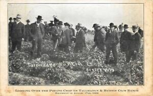 Potato-Crop-Tallmadge-amp-Buntin-Co-039-s-Ranch-Bosler-Wyoming-1908-Vintage-Postcard