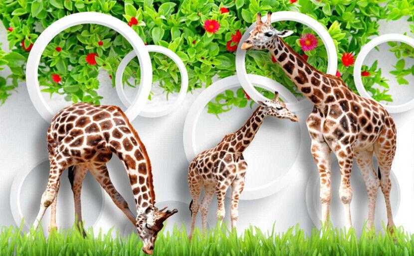 Papel Pintado Mural De Vellón Tres jirafas En Paisaje Hierba 2 Paisaje En Fondo De Pantalla 422612
