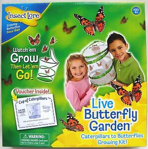image is loading insect lore live painted lady caterpillar amp butterfly - Live Butterfly Garden