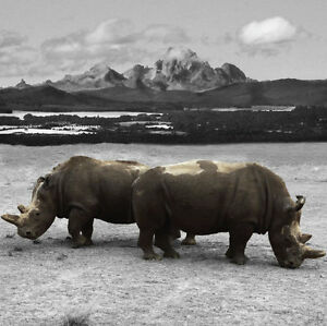 GILLIE-AND-MARC-direct-from-the-artists-authentic-photography-print-rhino-Africa