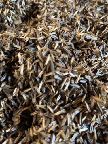 """Echinacea /""""Perroquet/"""" 30 graines limitée En stock"""