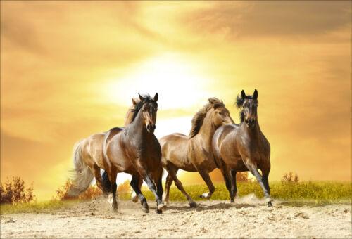 Wall stickers deco sticker 16 horses-ref 1461 dimensions