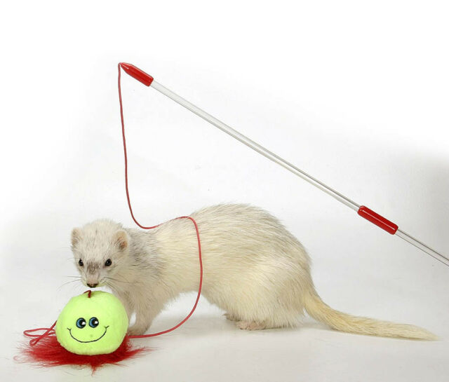 MARSHALL PET FERRET TEASER WAND TOY 1 PACK. FREE SHIPPING TO THE USA ONLY