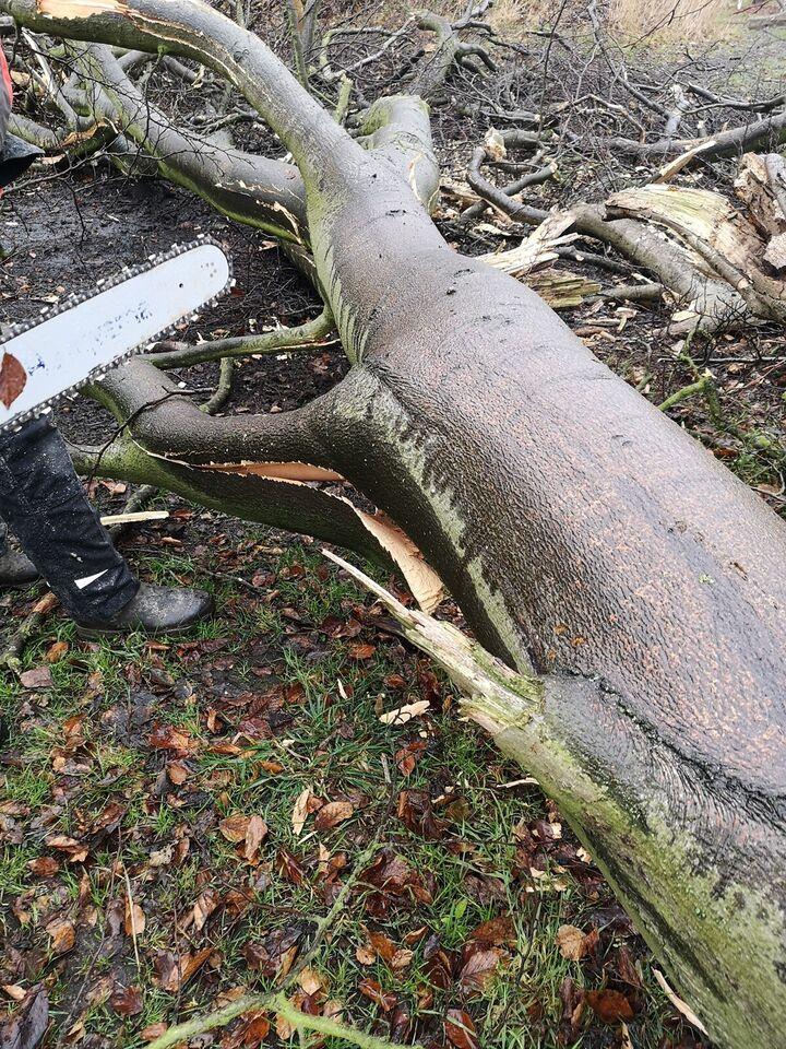 Træ fældning og brænde salg, tiltrædelse I