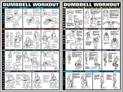 dumbbell workout dumbells free weights pro fitness wall