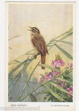 Birds, Sedge Warbler, Winifred Austin Art Postcard #2, B558
