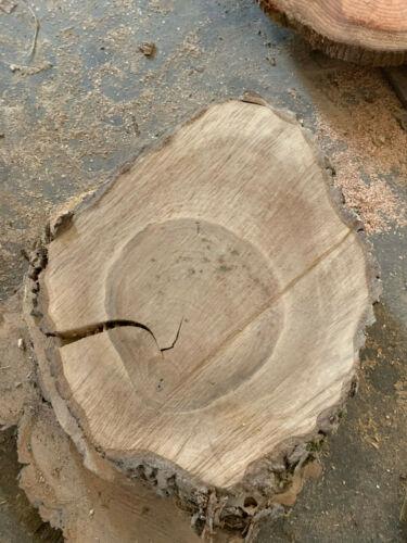 noyer sec 60-65x50x5cm env Baumscheibe disque en bois