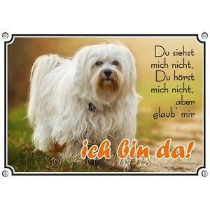 Bouclier pour chien Havanese - Bouclier en métal - De Din A5 à A3