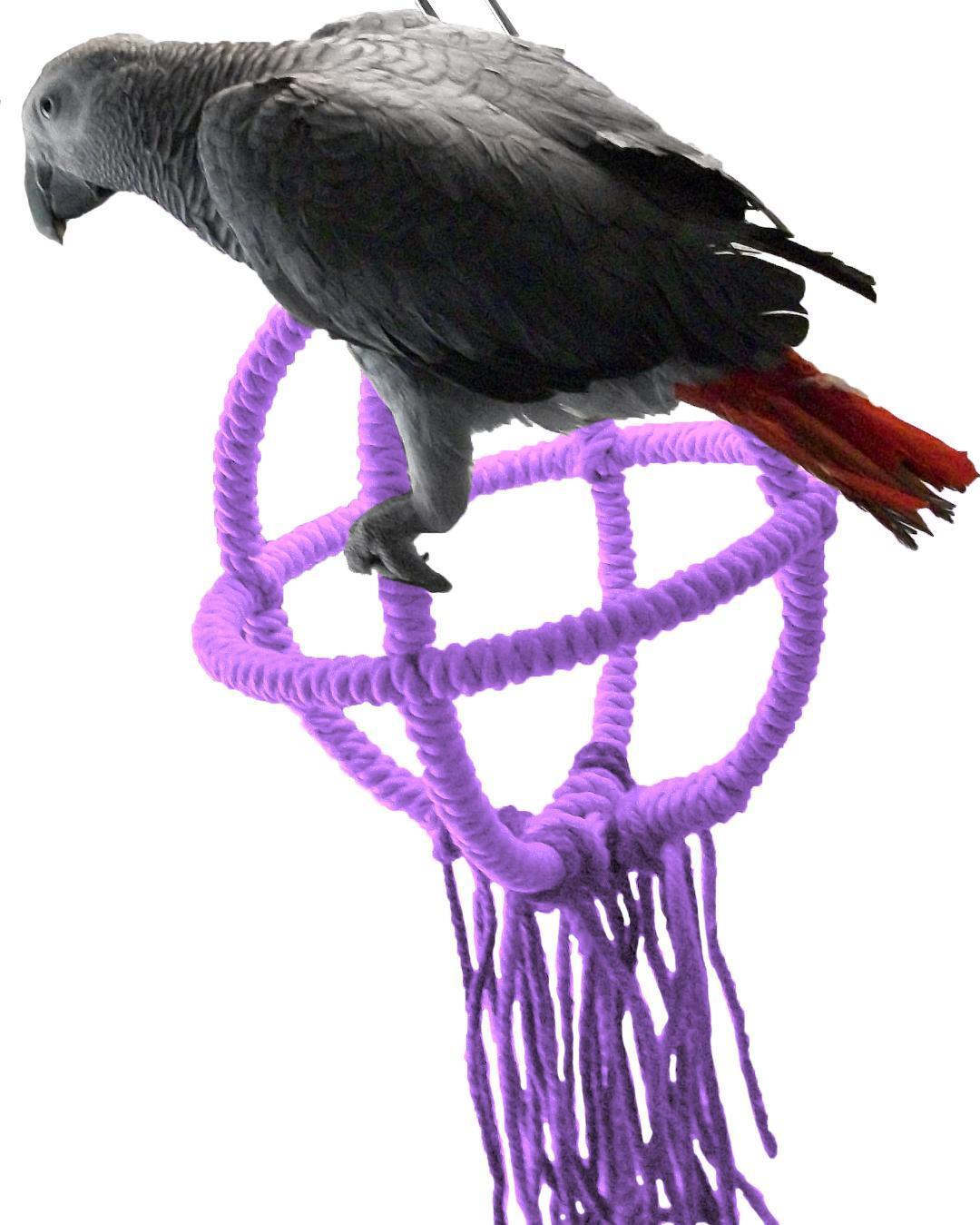Medium Purple Parred Orbit Swing Toys Perches