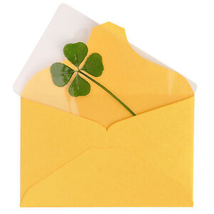 Image Is Loading Real 4 Four Leaf Clover Irish Good Luck