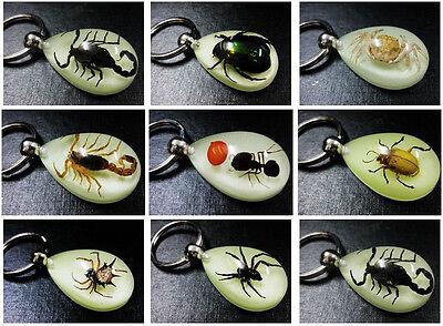 wholesale lots 26pcs black scorpion clear deaign vase  mix style key-chains