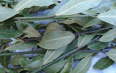 bio Laurier sauce 50 feuilles