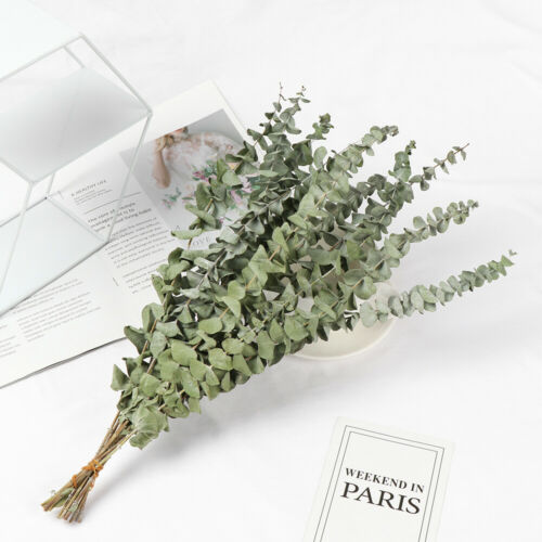Photo Props Natural Dried Bouquets Eucalyptus Real Flower Plant Stems