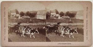 A New Inghilterra Farm US USA Foto Stereo Vintage Albumina