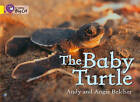 Collins Big Cat: The Baby Turtle Workbook by HarperCollins Publishers (Paperback, 2012)