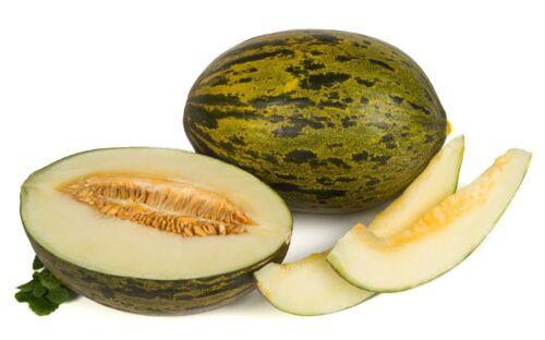 Melon Piñonet Skin of Toad 155 Seeds Fresh