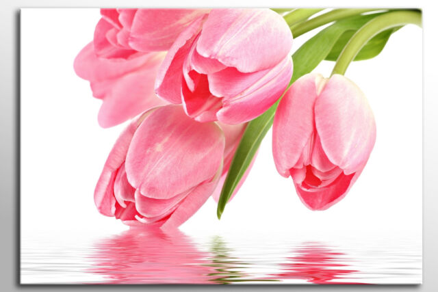 LARGE CANVAS WALL ART BEAUTIFUL PINK WHITE TULIPS FLOWERS PICTURE NEW PRINT ZEN