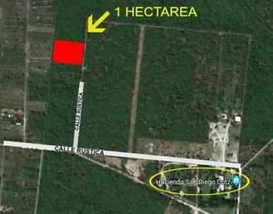 Terreno de 1 Hectárea en venta en Conkal Merida. Gran oportunidad!