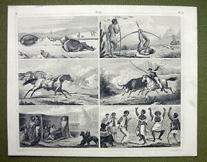 PEOPLE-Patagonia-Hunting-Greenland-Seal-Shooting-1844-Antique-Print-Engraving