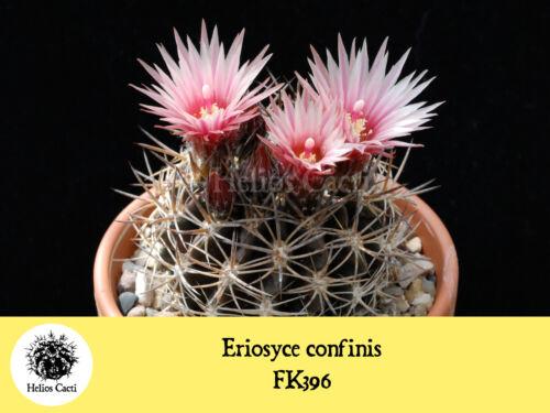 Cactus Graines-ERIOSYCE confinis FK396