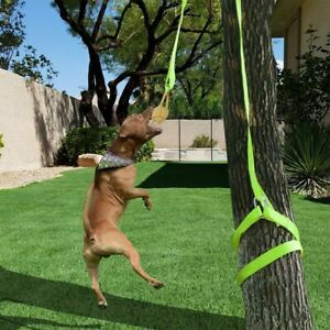 Outdoor-Hanging-Bungee-Rope-Tug-Of-War-Interactive-Dog-Toy-For-Medium-Or-Large