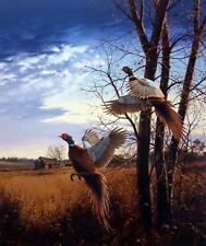 "David Maass "" Evening Flight Pheasant"" Farm Art Print  Artists Proof With Cert"