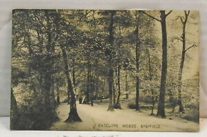 Sheffield-Endcliffe-Woods-VINTAGE-Postcard-No-42