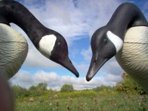 Canada-Goose-Decoy-LARGE-Flocking-Kit