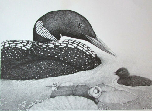 """Tyler Wild Common Loon /& Chick 15/"""" x 18/"""" Maine Art Poster 1984 D D"""