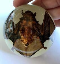 T-01 Vintage Glow In Dark base real dead bat in lucite dome Paperweight Specimen