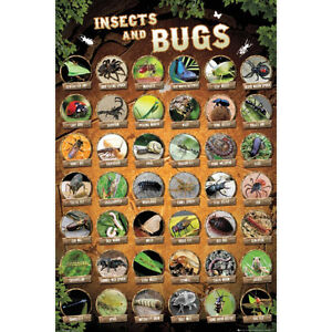 Insects-amp-Bugs-Compilation-Chart-POSTER-61x91cm-NEW-insect-types-names-pic