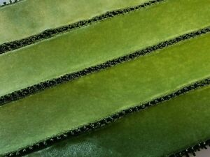 Vintage-Picot-Edge-Rayon-Velvet-Ribbon-1yd-Made-in-France-1-5-034-38mm-Moss-Green