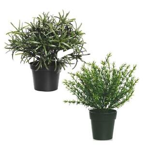 Image Is Loading Artificial Potted Ornamental Herb Plants Props Rosemary Thyme