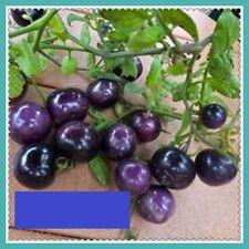 30x Lila Blaue Tomaten Samen Saatgut Gemüse Pflanze Rarität essbar lecker #51