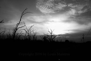Ragged-Trees-Along-the-Highway-Louisiana-13x19-034-Print-SIGNED-by-Louis-Maistros