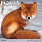 Foxes 2017 Wall Calendar by Willow Creek Press