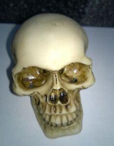 Halloween-Skull-Skeleton-head-Life-Like-Ornament-Model-Resin