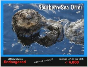 """Southern Sea Otter, an Endangered Species card by """"PostcardsTo SaveThePlanet"""""""