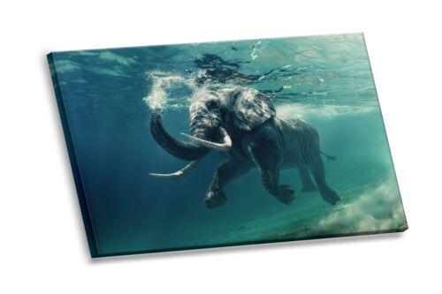 Elephant Swimming Underwater Photo HD Canvas Giclee Art Print