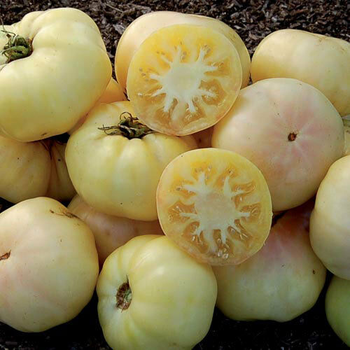 White Beauty-Blanche Tomates 30 tomates-graines