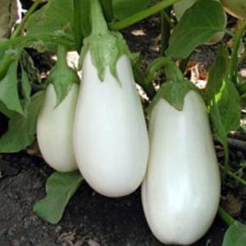 Heirloom Vegetable Garden Seeds Non Gmo//Hybrid Organic Survival Plant Bank Lot