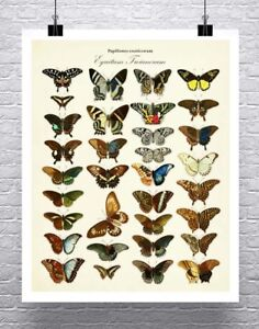 Exotic-Butterflies-Vintage-Illustration-Rolled-Canvas-Giclee-Print-24x30-Inches