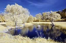Nikon D70s infrared converted Camera 590nm Goldie Infrared Converted Camera.