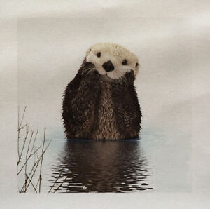 Otter-Cute-Animal-Wilflife-Country-side-Fabric-Panel-Cushion-Upholstery-Craft