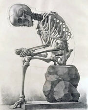 Vintage Medical Illustration Human Skeleton Anatomy Chart Real Canvas Art Print