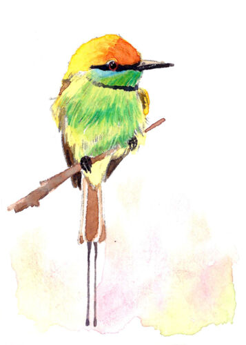 Rainbow bee eater Art print 2.5x3.5 ACEO Limited Edition