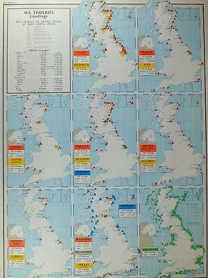 Vintage Large Map Of Britain Sea Fisheries Landings Whiting Dogfish Redfish Ebay